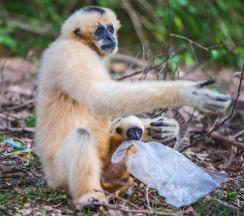 opice-sacik